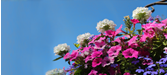 Hanging Baskets - A Beginner's Guide
