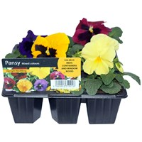 Glenbank  Bedding Plants - Assorted